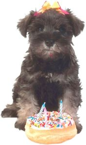 dog and birthday donut